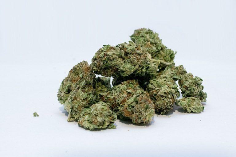 Medyczna marihuana wkrótce w aptekach