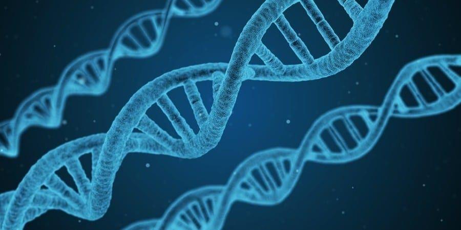 Dna materiał genetyczny
