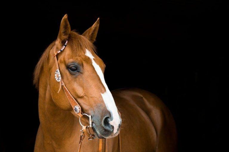 Bioceltix will develop a biological drug for horses