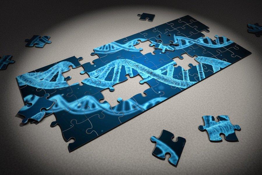 puzzle diagnostyka molekularna genetyka
