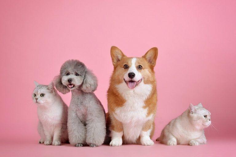 Czy leki wykorzystujące komórki macierzyste pomogą psom?